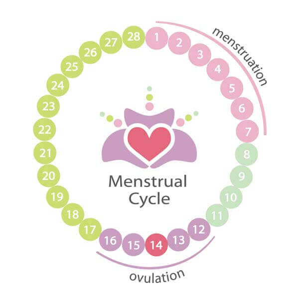Menstruation (Period)